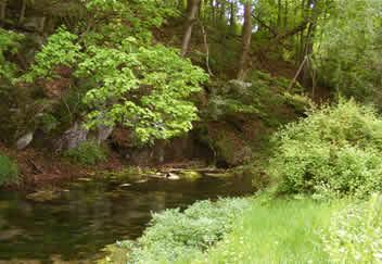 Big spring creek big spring creek for Spring creek pa fishing report